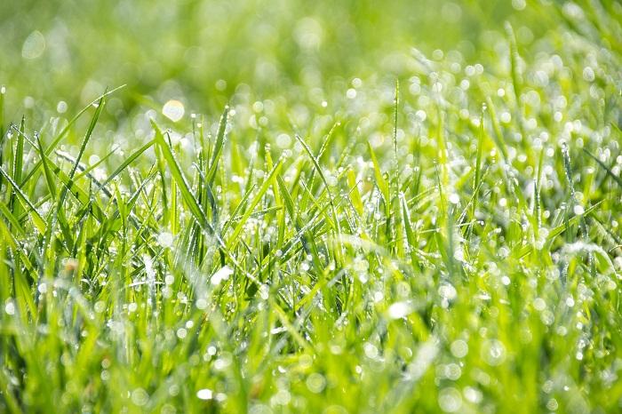Ako založiť trávnik so správnym semienkom